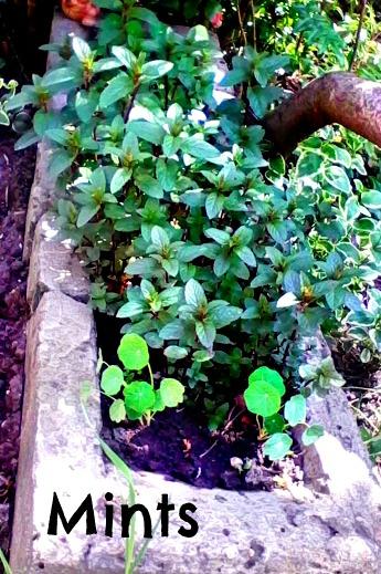 Anna's backyard - gardening - Anna Can Do It!