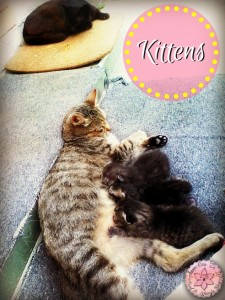 Kittens - Anna Can Do It!