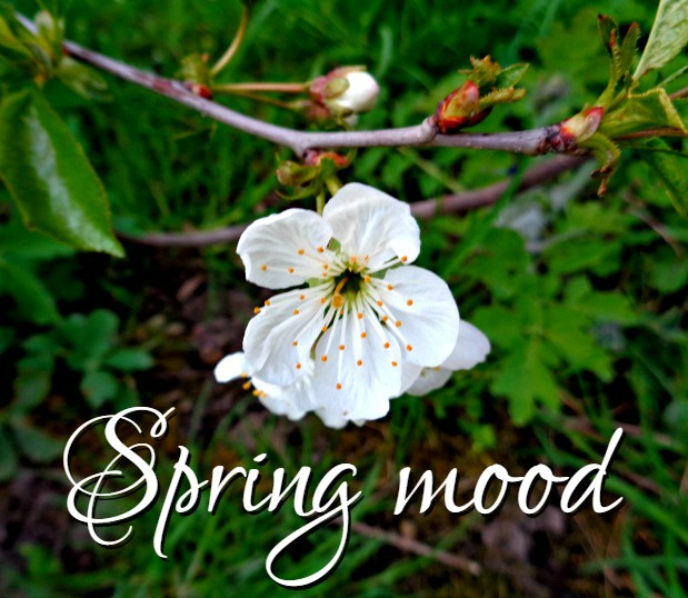 Spring mood - Anna Can Do It!