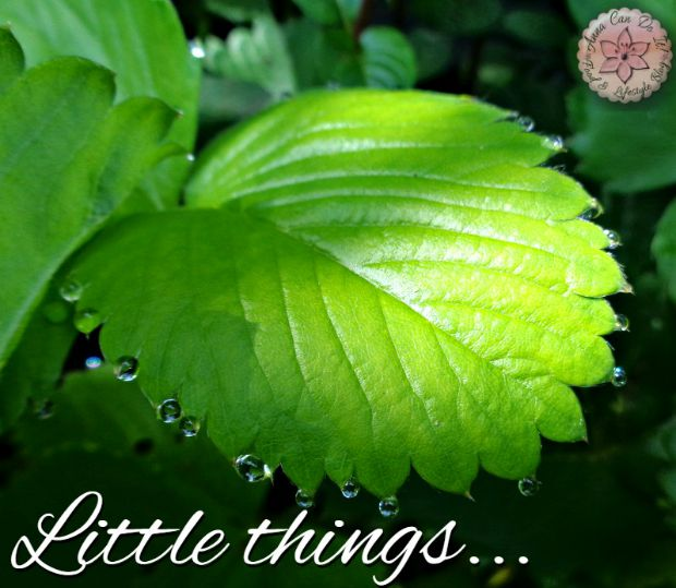Little things - Anna Can Do It!