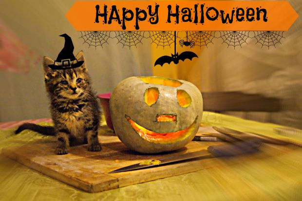 Halloween - Anna Can Do It!
