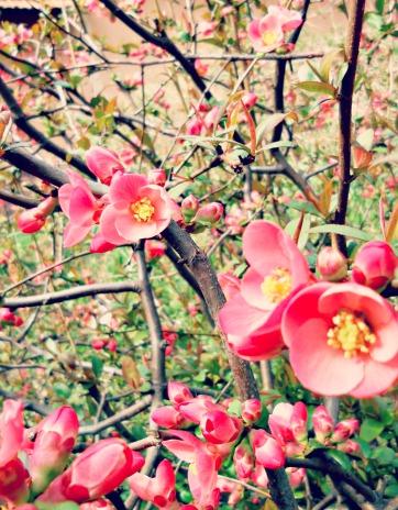 Hello Spring! - Anna Can Do It!